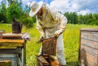 Beekeeping Workshop (Youth Art Month)