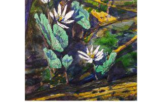 "Cameron Berglund, ""Plein-Air Bloodroot Flowers, (Sanguinaria canadensis) State Botanical Garden of Georgia"""