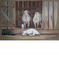 Sheep x3