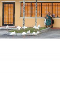 Woman with Ibis