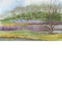 Sawgrass 2 OCAF