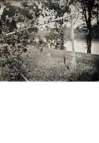 Muscadine, Fence, Levee – Louisiana
